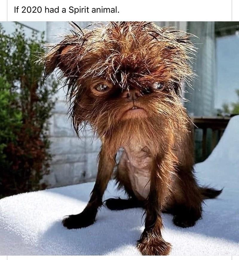 Dog - If 2020 had a Spirit animal.