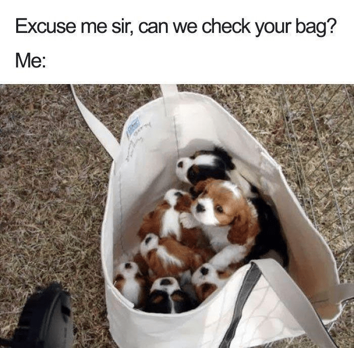 Canidae - Excuse me sir, can we check your bag? Me: