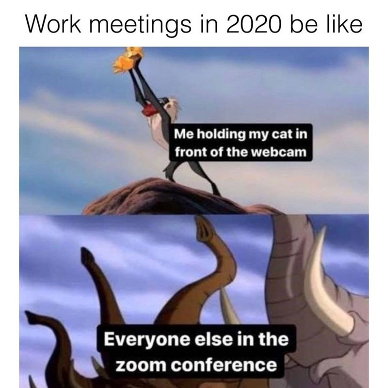 Cartoon - Work meetings in 2020 be like Me holding my cat in front of the webcam Everyone else in the zoom conference