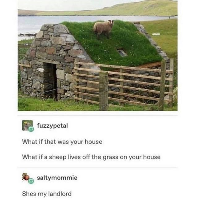 Pasture - fuzzypetal What if that was your house What if a sheep lives off the grass on your house saltymommie Shes my landlord