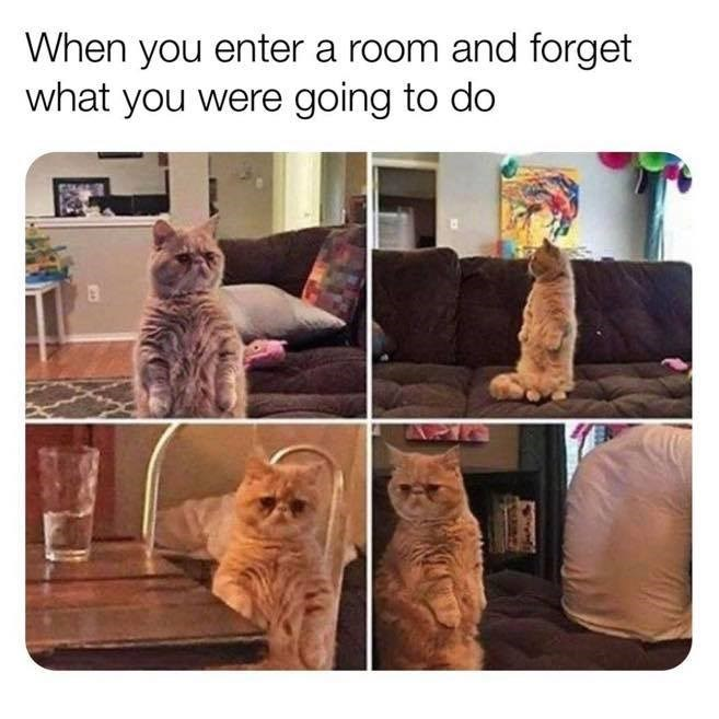 Cat - When you enter a room and forget what you were going to do