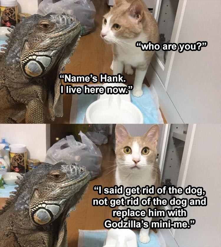 """Cat - """"who are you?"""" """"Name's Hank. O live here now."""" """"I said get rid of the dog, not get rid of the dog and replace him with Godzilla's mini-me."""""""