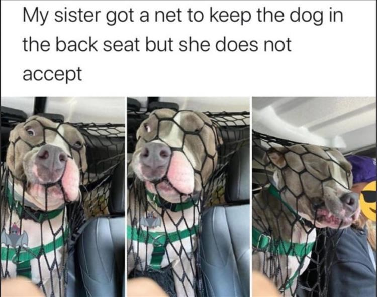 Dog breed - My sister got a net to keep the dog in the back seat but she does not ассept