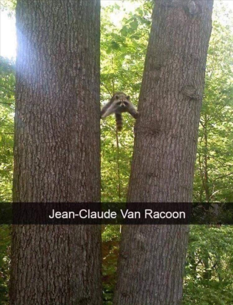 Tree - Jean-Claude Van Racoon