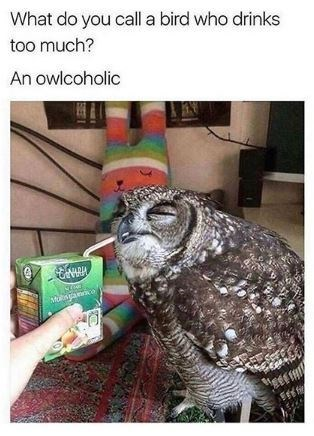 Bird - What do you call a bird who drinks too much? An owlcoholic 傳鮮