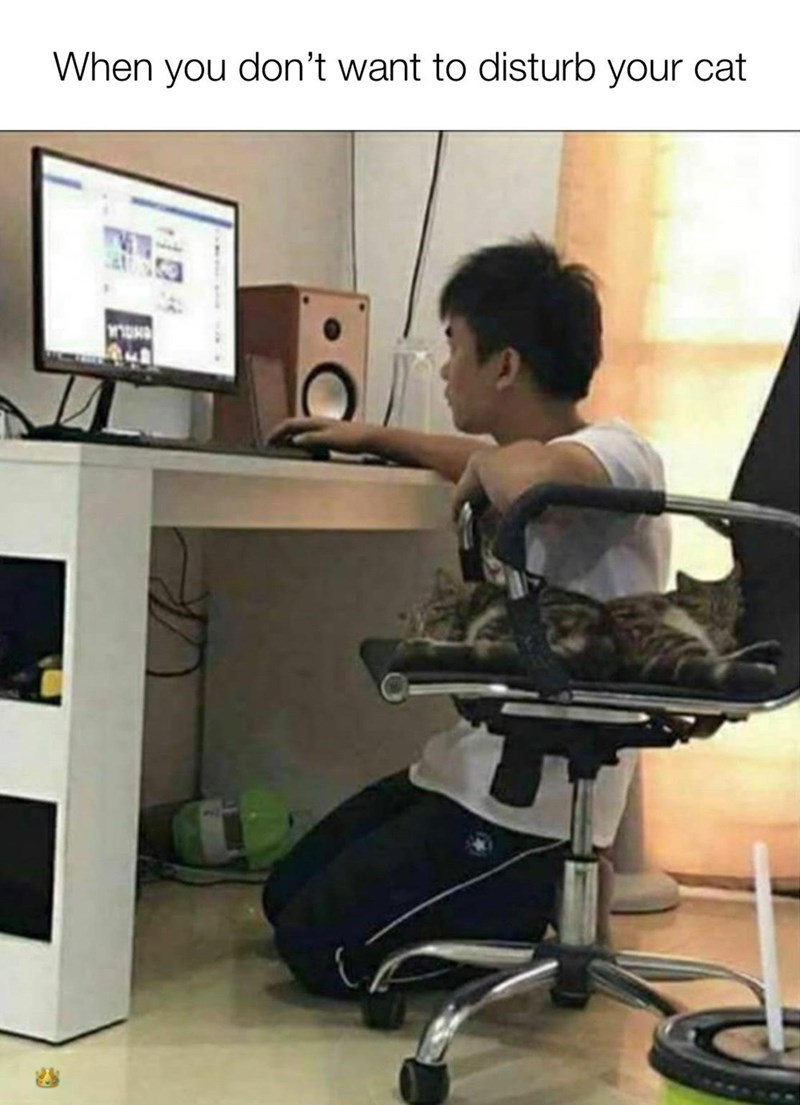 Office chair - When you don't want to disturb your cat