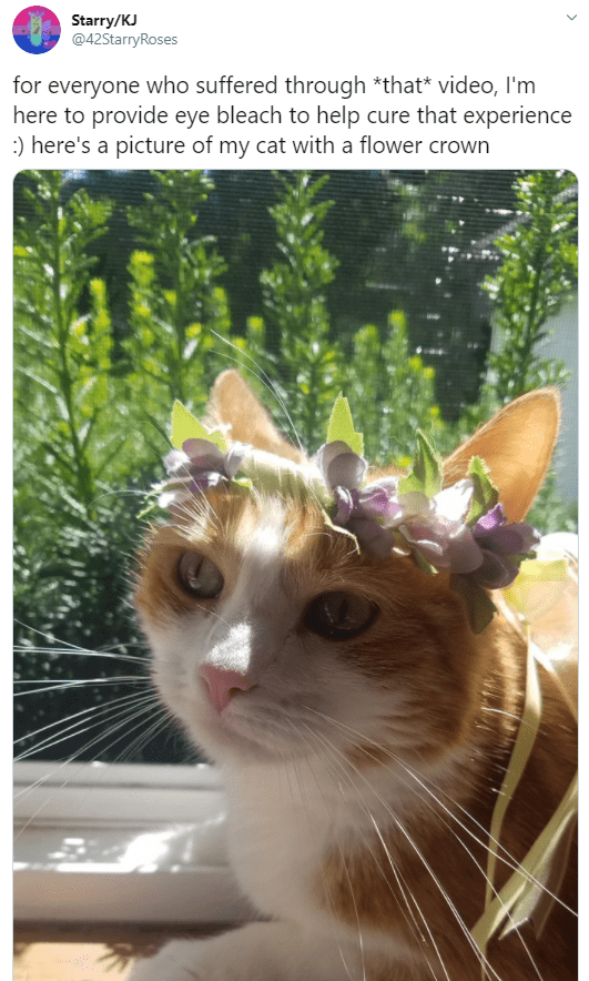 Cat - Starry/KJ @42StarryRoses for everyone who suffered through *that* video, I'm here to provide eye bleach to help cure that experience :) here's a picture of my cat with a flower crown