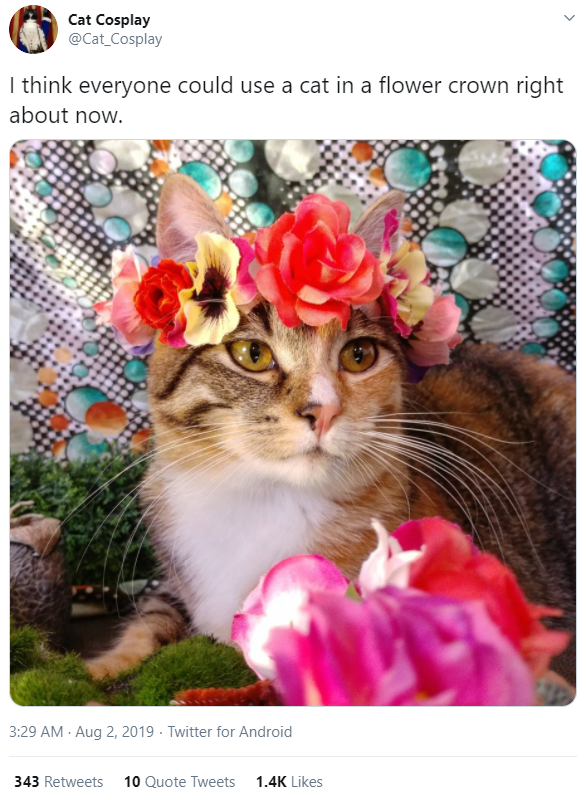 Cat - Cat Cosplay @Cat_Cosplay I think everyone could use a cat in a flower crown right about now. 3:29 AM - Aug 2, 2019 · Twitter for Android 343 Retweets 10 Quote Tweets 1.4K Likes