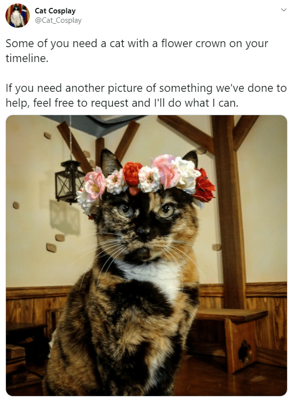 Cat - Cat Cosplay @Cat_Cosplay Some of you need a cat with a flower crown on your timeline. If you need another picture of something we've done to help, feel free to request and l'll do what I can.