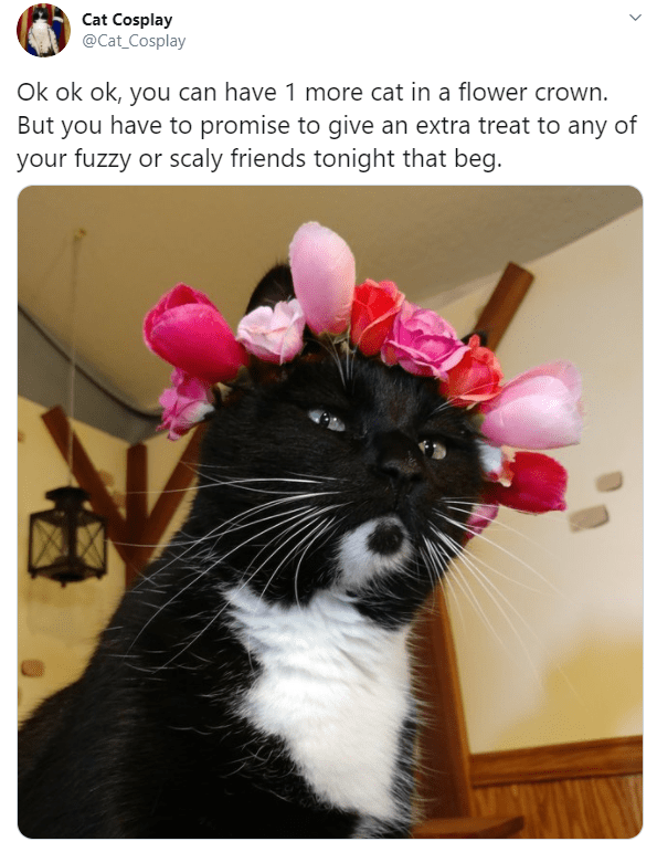 Cat - Cat Cosplay @Cat_Cosplay Ok ok ok, you can have 1 more cat in a flower crown. But you have to promise to give an extra treat to any of your fuzzy or scaly friends tonight that beg. >