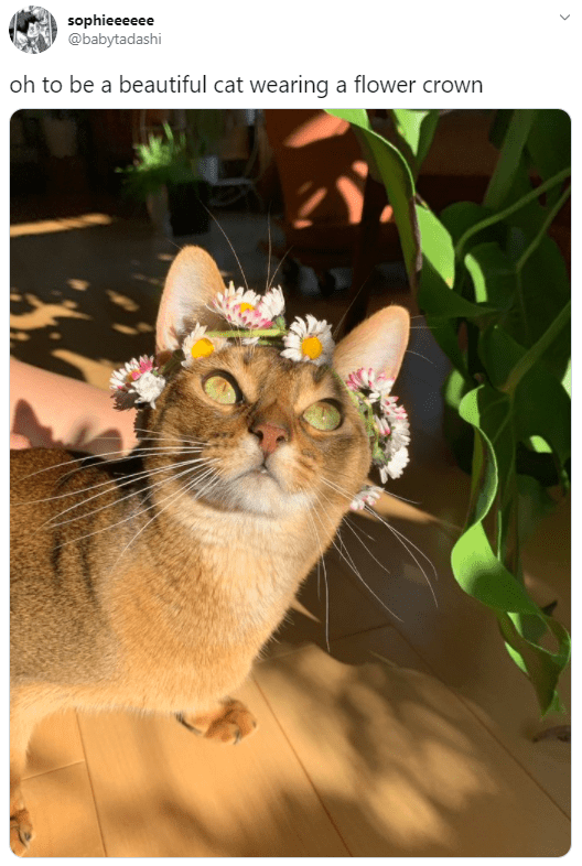 Cat - sophieeeeee @babytadashi oh to be a beautiful cat wearing a flower crown