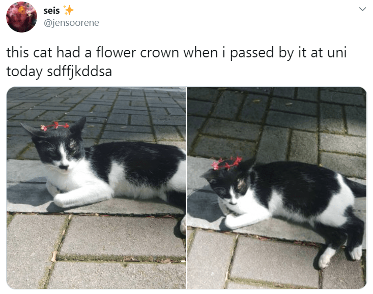 Cat - seis @jensoorene this cat had a flower crown when i passed by it at uni today sdffjkddsa