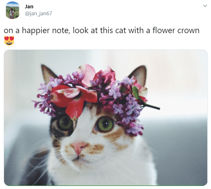 Cat - Jan @jan_jan67 on a happier note, look at this cat with a flower crown