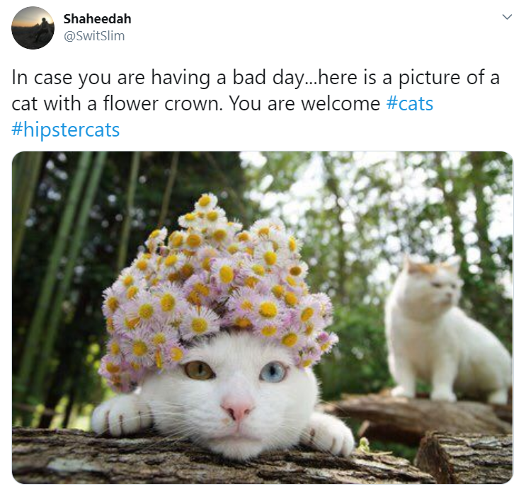 Cat - Shaheedah @SwitSlim In case you are having a bad day..here is a picture of a cat with a flower crown. You are welcome #cats #hipstercats