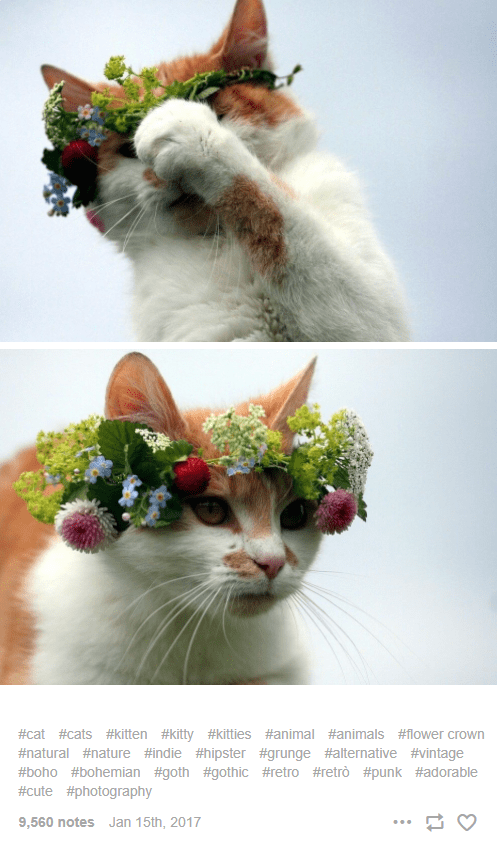 Cat - #cat #cats #kitten #kitty #kitties #animal #animals #flower crown #natural #nature #indie #hipster #grunge #alternative #vintage #boho #bohemian #goth #gothic #retro #retrò #punk #adorable #cute #photography 9,560 notes Jan 15th, 2017