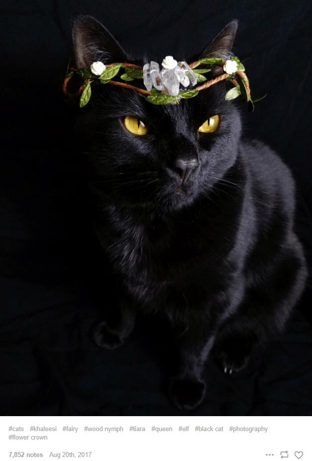 Cat - #cats #khaleesi #fairy #wood nymph #tiara #queen #elf #black cat #photography #flower crown 7,852 notes Aug 20th, 2017