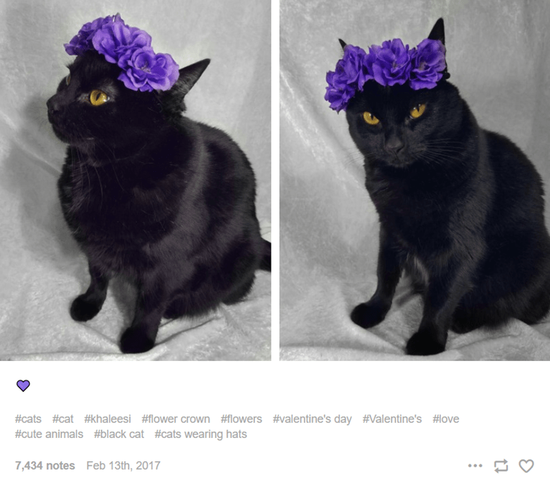 Cat - #cats #cat #khaleesi #flower crown #flowers #valentine's day #Valentine's #love #cute animals #black cat #cats wearing hats 7,434 notes Feb 13th, 2017 ...
