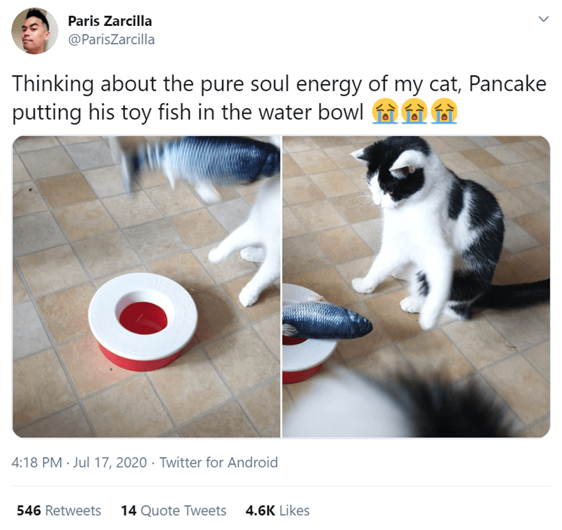 tweet by Paris Zarcilla @PariSZarcilla Thinking about the pure soul energy of my cat, Pancake putting his toy fish in the water bowl black and white cat