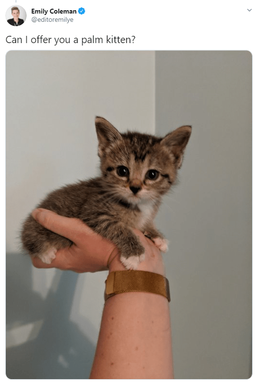 Cat - Emily Coleman @editoremilye Can I offer you a palm kitten?