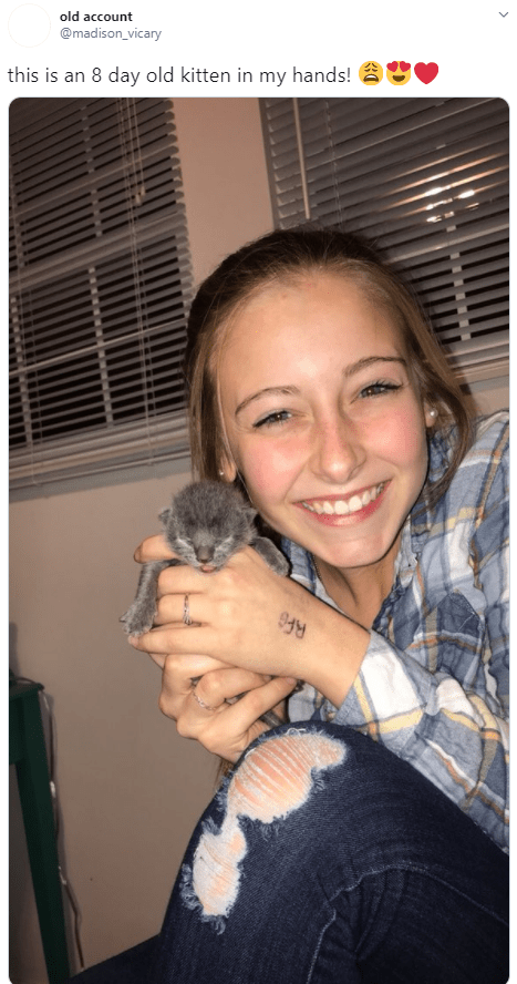 Chinchilla - old account @madison_vicary this is an 8 day old kitten in my hands!
