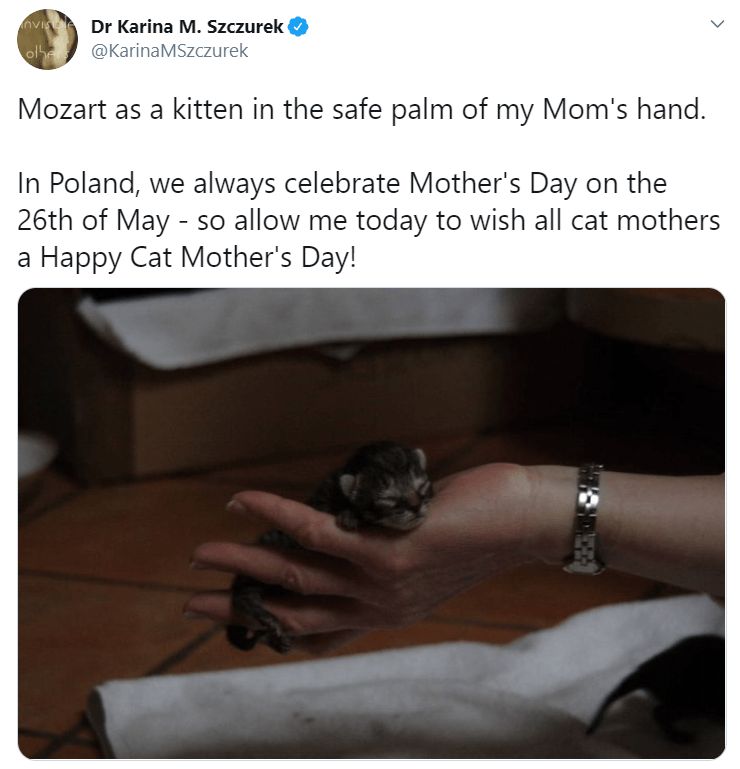 Text - vI Dr Karina M. Szczurek ofher @KarinaMSzczurek Mozart as a kitten in the safe palm of my Mom's hand. In Poland, we always celebrate Mother's Day on the 26th of May - so allow me today to wish all cat mothers a Happy Cat Mother's Day! >