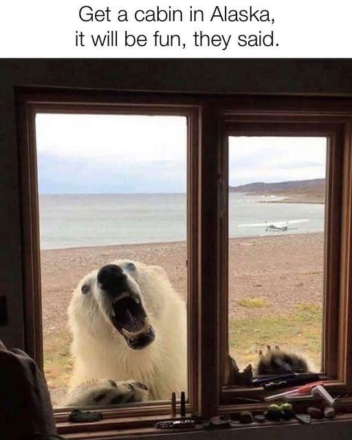 Canidae - Get a cabin in Alaska, it will be fun, they said.
