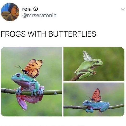 Adaptation - reia O @mrseratonin FROGS WITH BUTTERFLIES