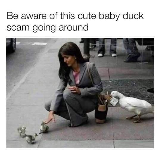Facial expression - Be aware of this cute baby duck scam going around
