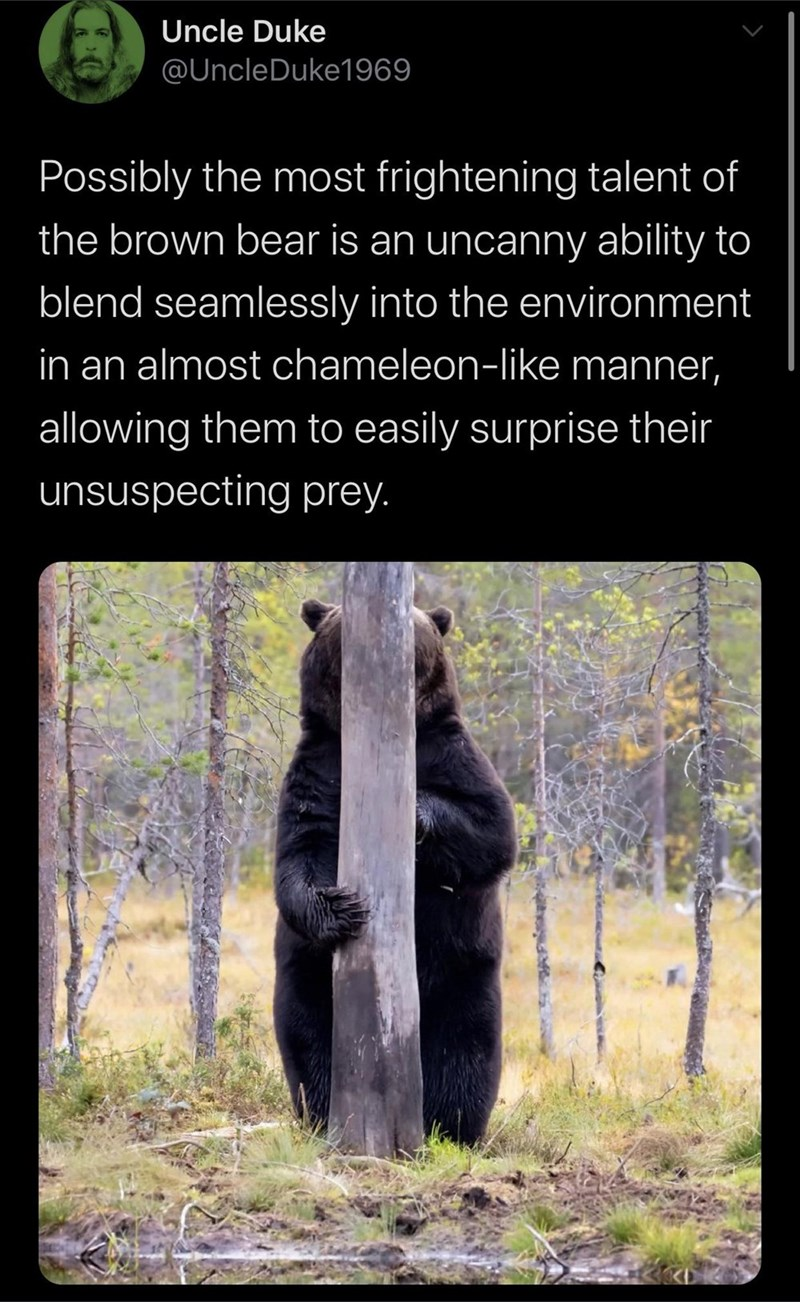 Bear - Uncle Duke @UncleDuke1969 Possibly the most frightening talent of the brown bear is an uncanny ability to blend seamlessly into the environment in an almost chameleon-like manner, allowing them to easily surprise their unsuspecting prey.