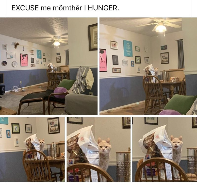 Product - EXCUSE me mömthêr I HUNGER. YOLO THE MOON ON MI  口回  