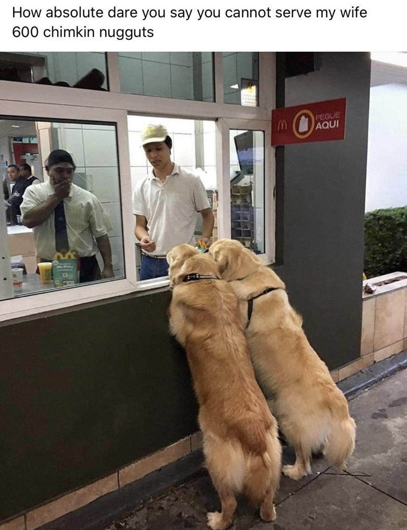 Dog - How absolute dare you say you cannot serve my wife 600 chimkin nugguts PEGUE AQUI PCPIAE