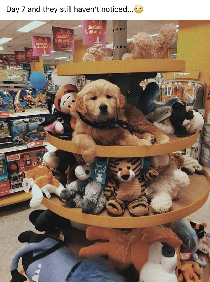 Canidae - Day 7 and they still haven't noticed... Jaaaaa dit wil ik! Jaaaaa dit wil ik! Jaaaaa dit wil ik! ৯ BERO an rice Intertoys 70% leddy Plucho Price 16
