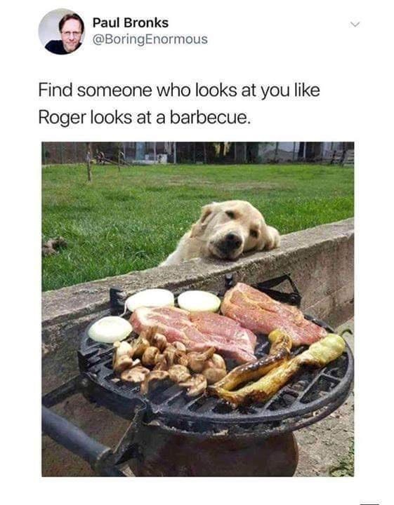 Companion dog - Paul Bronks @BoringEnormous Find someone who looks at you like Roger looks at a barbecue.