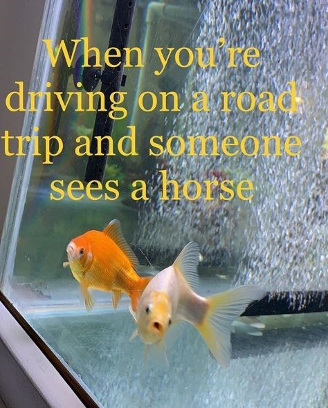 Fish - When you re diving on a road trip and soneone sees a horse