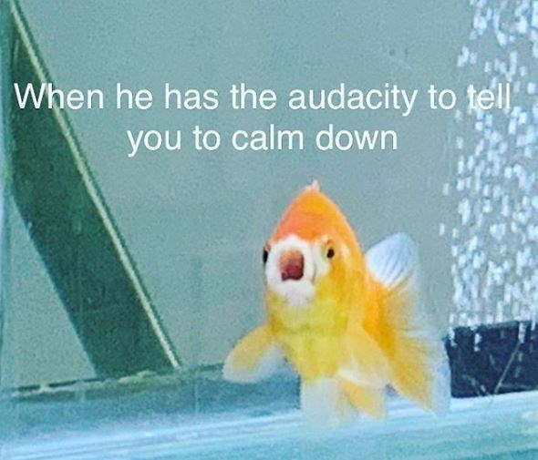 Text - When he has the audacity to tll you to calm down