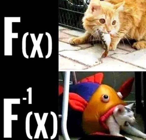 Cat - Fox) Foo -1