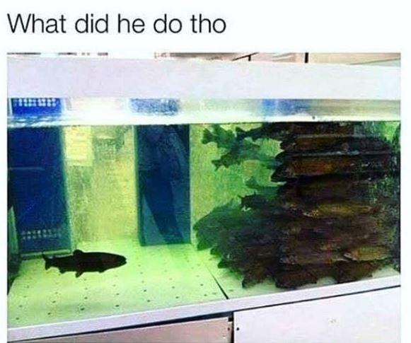 Aquarium - What did he do tho
