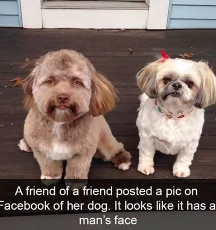 Dog - A friend of a friend posted a pic on Facebook of her dog. It looks like it has a man's face
