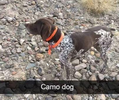 Dog - Camo dog