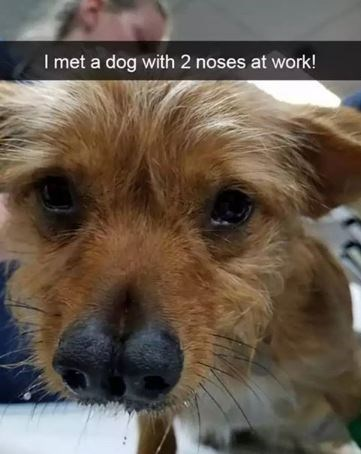 Dog - I met a dog with 2 noses at work!