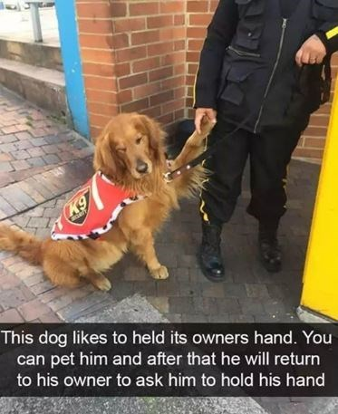 Dog - K9 This dog likes to held its owners hand. You can pet him and after that he will return to his owner to ask him to hold his hand