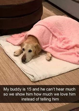 Dog breed - My buddy is 15 and he can't hear much so we show him how much we love him instead of telling him
