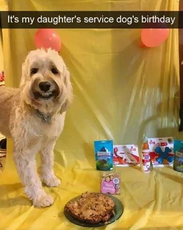 Dog - It's my daughter's service dog's birthday