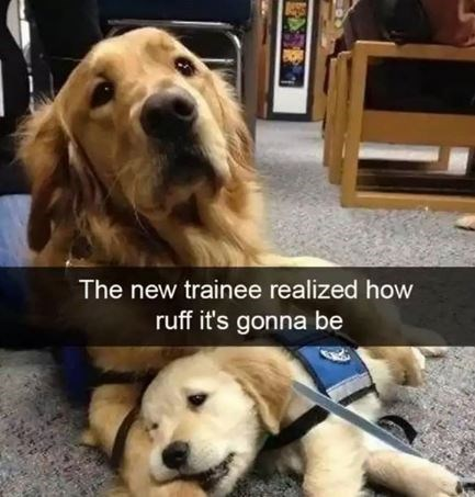 Dog - The new trainee realized how ruff it's gonna be