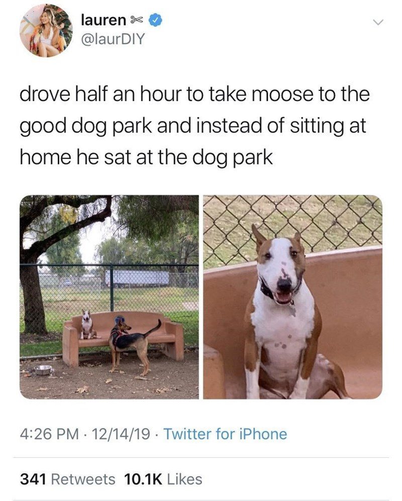 tweet by lauren @IaurDlY drove half an hour to take moose to the good dog park and instead of sitting at home he sat at the dog park funny dog on a bench outdoors