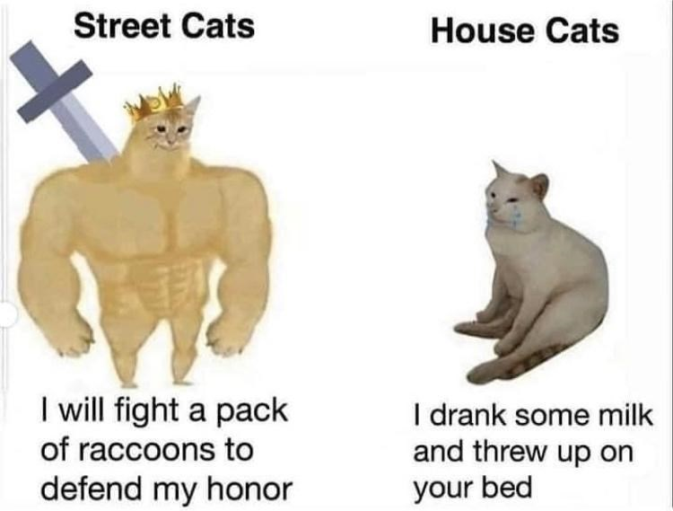 Funny meme about street cats vs house cats | Street Cats I will fight a pack of raccoons to defend my honor House Cats I drank some milk and threw up on your bed
