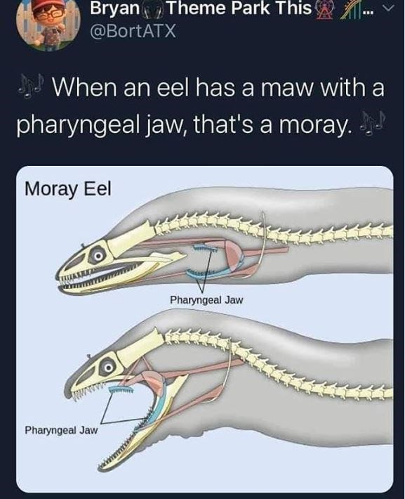 Reptile - Bryan Theme Park This . @BortATX When an eel has a maw with a pharyngeal jaw, that's a moray. Moray Eel Pharyngeal Jaw Pharyngeal Jaw