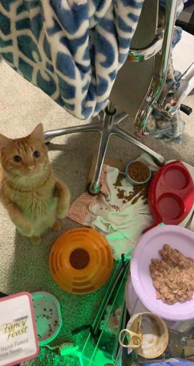 Cat - Fancy Feast Hand-Flaked non leats