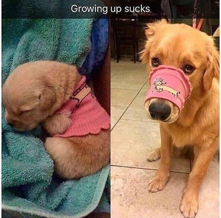 Dog - Growing up sucks