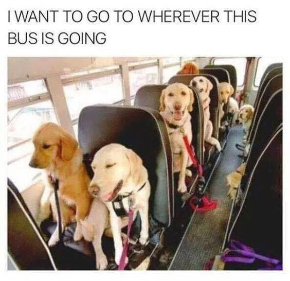 Dog - I WANT TO GO TO WHEREVER THIS BUS IS GOING